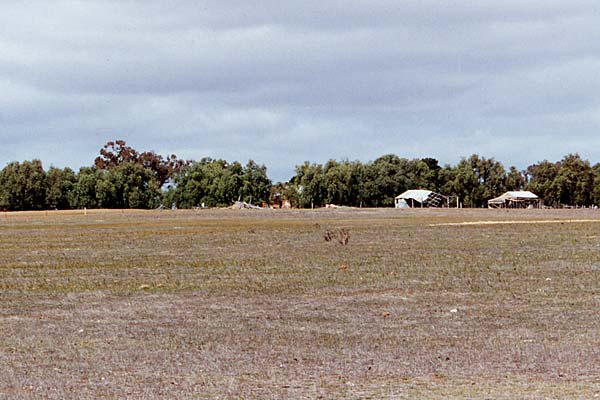 View towards the Ellendale homestead from the Marong-Serpentine Road
